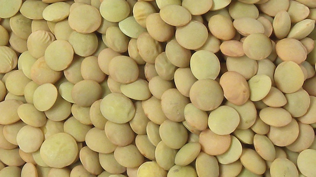 Producers set to benefit from global pulses celebration